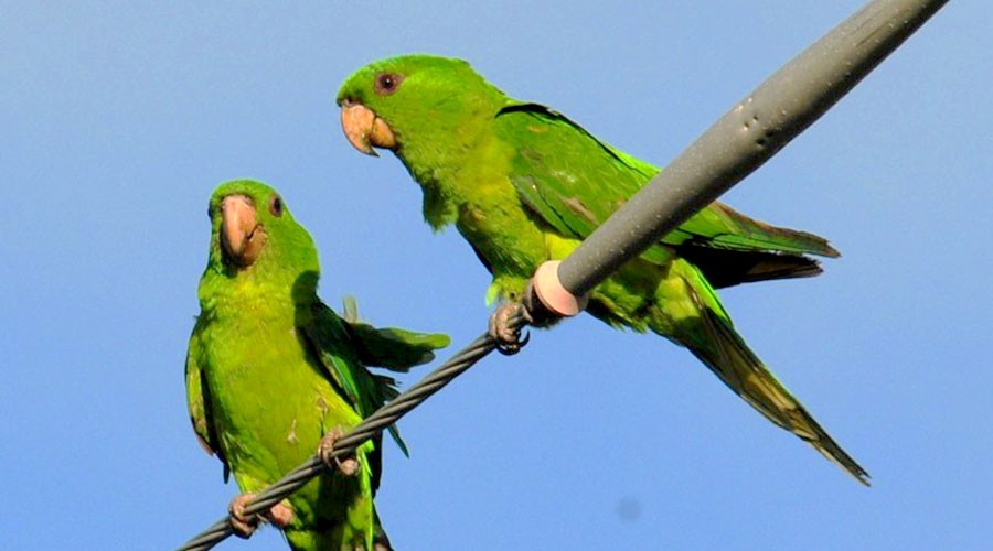 Surfside's Green Parrots | Visit Surfside Florida